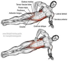 Lying side hip raise. An isolation push exercise that works many muscles! Muscles worked: Internal and External Obliques, Gluteus Medius, Gluteus Minimus, Tensor Fasciae Latae, Quadratus Lumborum, Psoas Major, Iliocastalis Lumborum, Iliocastalis Thoracis, https://www.musclesaurus.com/