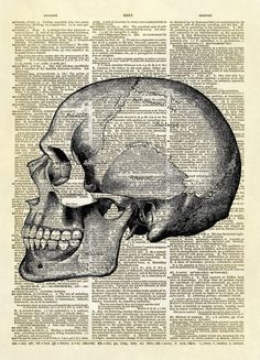 This print features a detailed illustration of the side view of a human skull. Great for anyone interested in anatomy. It also makes a fun Halloween decoration. This is an amazing image printed on an