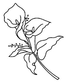 Lily Coloring Pages Could Be More Beautiful If Properly Colored The