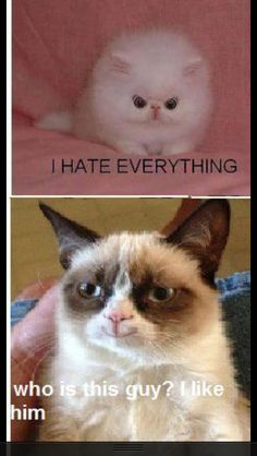 The Best of the Grumpy Cat Meme in 25 Pictures www. The Best of the Grumpy Cat Meme in 25 Pictures www. Grumpy Cat Quotes, Funny Grumpy Cat Memes, Funny Animal Jokes, Cat Jokes, Cute Funny Animals, Funny Animal Pictures, Funny Cats, Hilarious Jokes, Grumpy Kitty