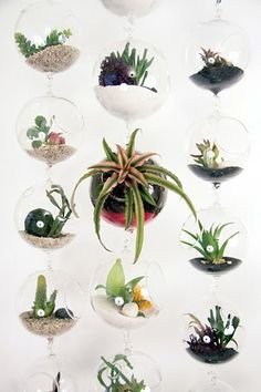 hanging orb terrariums!