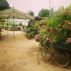 Open Sesame! For a tour of the horticultural delights follow my blog at…