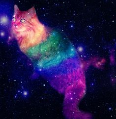 1000+ images about Cats In Space! on Pinterest | Space cat ...