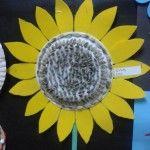 anasınıfı ay çiçeği etkinliği