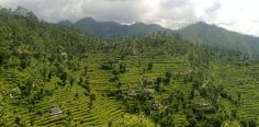 Paddy fields: Garhwal of Uttarakhand, India