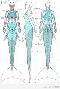 Anatomy Of A Mermaid Anatomie einer Meerjungfrau siehe Hereso Hereso Hereso Hereso Hereso Hereso Reyes und Gonzalez ! Real Mermaids, Mermaids And Mermen, Fantasy Mermaids, Types Of Mermaids, Poses References, Mermaid Art, Mermaid Paintings, Mermaid Tails, Mermaid Tail Drawing