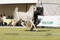 Ekstern   Mette Naturfotografie - Fotografie Gifhorn 2011 Janow Podlaski - Arabian Horse Days - Poland - Mette