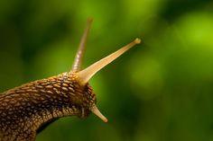 Snail  By Emre Arslan On 500px.