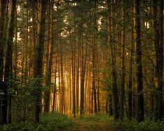Forest éclairée