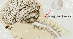 For years we have known that Feng Fu pressure points in the human body can play an important role in our health and well-being.