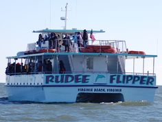 Dolphin watching on the Rudee Flipper