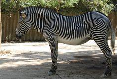 jardim zoologico 36.jpg
