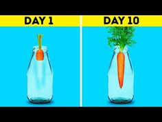 18 Awesome Hacks to Grow Your Own Plants Regrow Vegetables, Growing Vegetables, Pot Plante, Vegetable Garden Design, Growing Herbs, Growing Tomatoes, Grow Your Own Food, Flowering Trees, Hydroponics