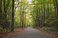 Looks like a place that I should visit: Kanawha State Forest, West Virginia (it's GORGEOUS in the fall, they say)