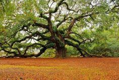 One amazing and odd tree