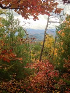 Fall #foliage, Great Smoky #Mountains National Park