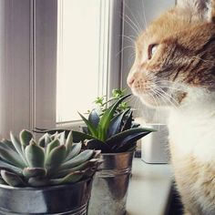 Cats, Nature, Animals, Gatos, Animales, Animaux, Kitty, The Great Outdoors, Cat