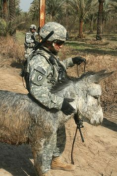 Rescue. 1st Lt. Louis Cascino, an infantry platoon leader, Company B, 1st Battalion, 27th Infantry Regiment, currently attached to 3rd Brigade Combat Team, 82nd Airborne Division, Multi-National Division–Baghdad, calms a donkey after he and his team rescued it from a drainage ditch.  Courtesy: wwwarmy.mil  The United States Army, (USA).
