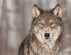 Testaa, mikä eläin olet suomalaisessa eläinhoroskoopissa | Kodin Kuvalehti