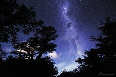 Patagonian Night - The milky way coming through the trees.. I really enjoyed this curve path in the clear patagonian nightSky South argentina . © Alexandre Deschaumes