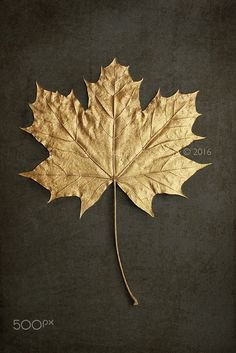 Gold Maple Leaf - Gold Maple Leaf.
