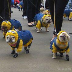 French Bulldog Minions