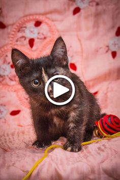 TO watch cat video stories , cat rescue ideas , rescue pets , funny cats and kittens videos stories Cute Cat Gif, Cute Cats, Funny Cats, Funny Animals, Kitten Love, Kitten Gif, Kittens Cutest, Cats And Kittens, Cat Video