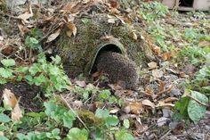 Hedgehog home Egelhuis. Garden Poems, North Garden, Hedgehog House, Bug Hotel, Allotment Gardening, Garden Angels, Garden Makeover, Home Garden Plants, Natural Garden