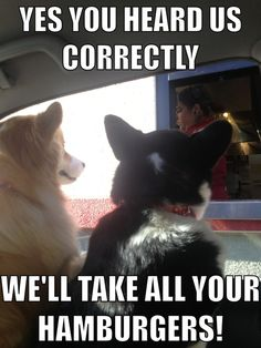 Corgis are such funny dogs! Corgi lovers and owners know all the funny things these special creatures do! Memes Humor, Funny Dog Memes, Cat Memes, Funny Dogs, Dog Humor, Dog Jokes, Cats Humor, Funny Kitties, Meme Meme