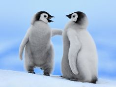 Ewallpaper brings Baby Penguin Desktop Wallpapers for your computer, laptop or for mobile phone. Download best Baby Penguin Desktop Wallpapers in different sizes and resolutions. We collect amazing Baby Penguin Desktop Wallpapers, images, pictures & photos for you from all around the internet with the internet to provide you premium quality Baby Penguin Desktop Wallpapers. So feel free to download and share with your friends our high quality Baby Penguin Desktop Wallpapers.