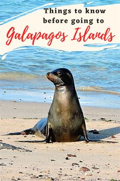 Are you planning on taking a trip to Galapagos Islands? Here are all the things you should know before you travel. How to get to the Galapagos, the cost, how to get around and other Galapagos travel tips. #Galapagos #Ecuador #Southamerica Galapagos Trip, Galapagos Islands, South America Destinations, South America Travel, Travel Destinations, Ocean Photography, Photography Tips, Portrait Photography, Wedding Photography