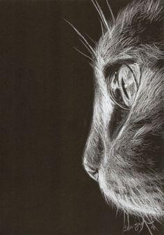 #desenho #pretoebranco #gato #dermatograph #draw #cat