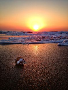 Volunteer with Via Volunteers in South Africa and experience our stunning beaches! Amazimtoti Beach in Durban Volunteer Work, Volunteer Abroad, On Golden Pond, Kwazulu Natal, Civil Engineering, Beautiful Beaches, Sea Shells, Seaside, South Africa