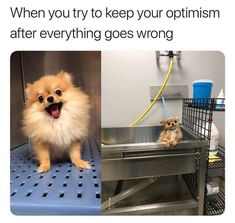 Trendy 18 Best Animal Memes Collection These funny animal memes are meant to brighten your day. Share these Animals Humor memes with your besties. Read This 18 Animals Humor memes: Funny Animal Jokes, Funny Dog Memes, Funny Animal Pictures, Cute Funny Animals, Funny Cute, Funny Dogs, Cute Dogs, Memes Humor, Baby Pictures