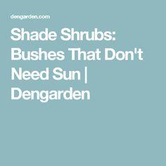 Shade Shrubs: Bushes That Don't Need Sun | Dengarden