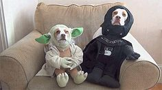 dogs,funny gifs