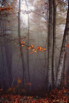 Autumn Colours ~ Fadi Tarawneh