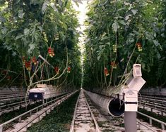 Self-Contained Robotic Farms Offer Glimpse of Lunar Food Factories
