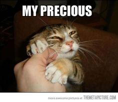 Funny Cat Memes | So today, through some cat memes, you get to see what she's like :)