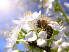 Places To Visit, Bee, Banner, Spirituality, Plants, Animals, Image, Quote, Spring