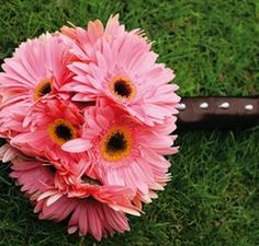 Friday Florals – Gerber Daisy » Alexan Events   Denver Wedding Planners, Colorado Wedding and Event Planning