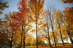Drive through New England's scenic country roads on a fall foliage road trip adventure. New England States, New England Travel, New England Homes, Backpacking Pictures, New England Fall Foliage, Changing Leaves, Road Trip Adventure, Vacation Pictures, Vacation Ideas