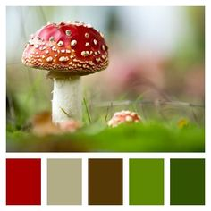 Dreaming of fairy gardens on this cold, snowy, winter day...  .  .  .  {: http://nyti.ms/2xP2C8K}  #moodboard #liveincolor #colorlover #colorlove #colorscheme #colorinspiration #color