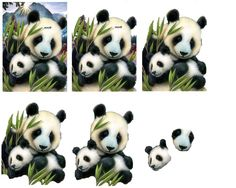 panda animals silly animals animal mashups animal printables majestic animals animals and pets funny hilarious animal 3d Paper Projects, Paper Crafts, Animals And Pets, Funny Animals, Image Stitching, Animal Mashups, 3d Sheets, Image 3d, 3d Pictures