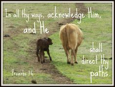 Proverbs 3:6  Popcorn and her calf Valentine