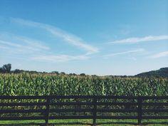 corn makes whiskey.