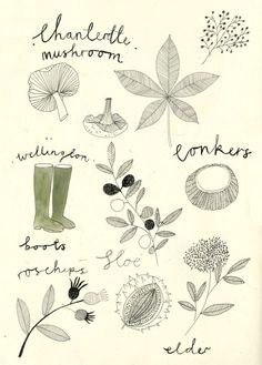 Katt Frank - Foraging in the English Hedgerow.http://kattfrank.tumblr.com/