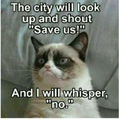 #grumpycat #catmeme #meme #cats #kittens www.CatKittyToiletTrain.com
