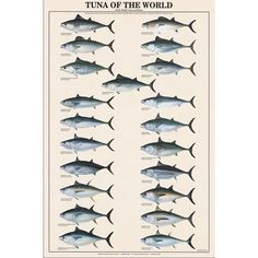 Tuna of the World Fish Chart Poster