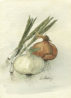 Original Watercolor of Onions